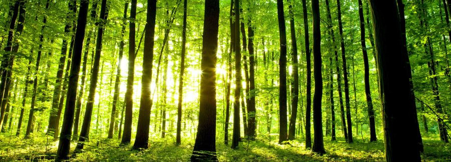 Zdjęcie lasu