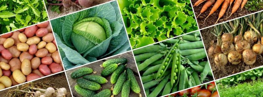 Zdjęcia różnych warzyw.